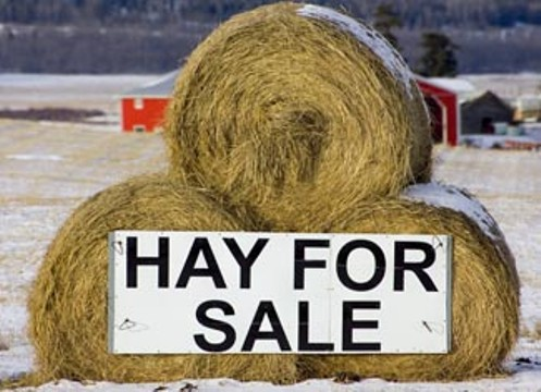 Purchasing Winter Hay