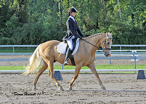 Leah and Harley at the Win A Gin dressage show in 2011. Harley was reserve champion in training level III.
