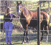 Prevent Horse Fence Failure