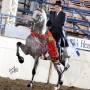 National Show Horsesq
