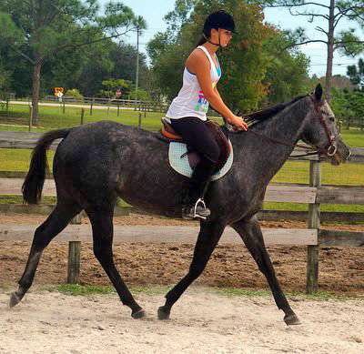 Unbridled Sally is a grey 4-year-old Thoroughbred mare at Pure Thoughts Horse Rescue in Florida