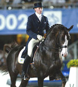 Swedish Warmblood. Courtesy SWANA