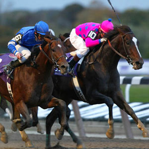Thoroughbred racing. Courtesy Breeders Cup
