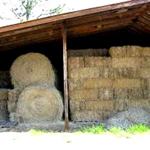 Round and square bales of hay