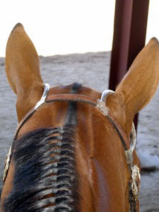 Horse Hearing. Courtesy eXtension HorseQuest