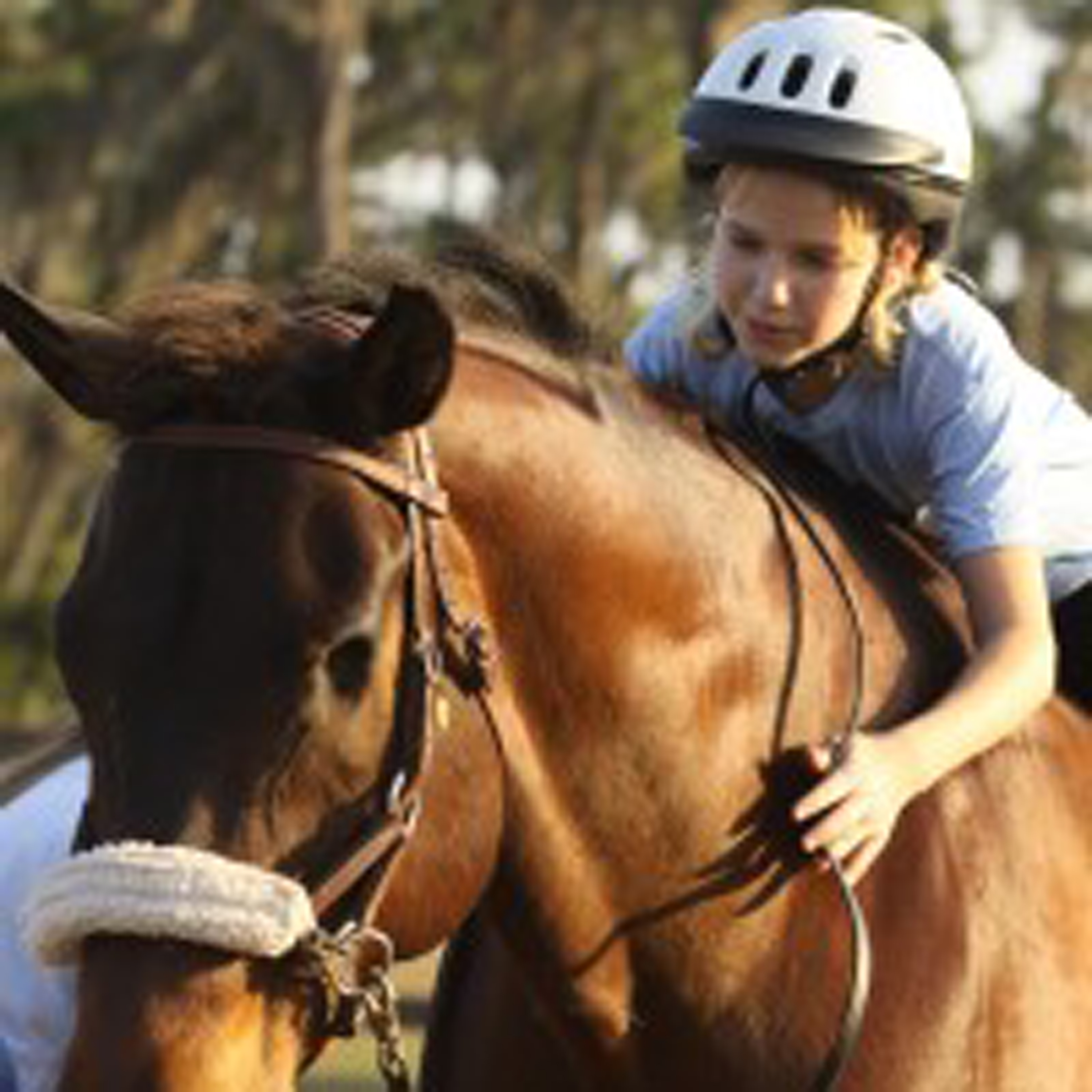 Give Back to American Quarter Horses