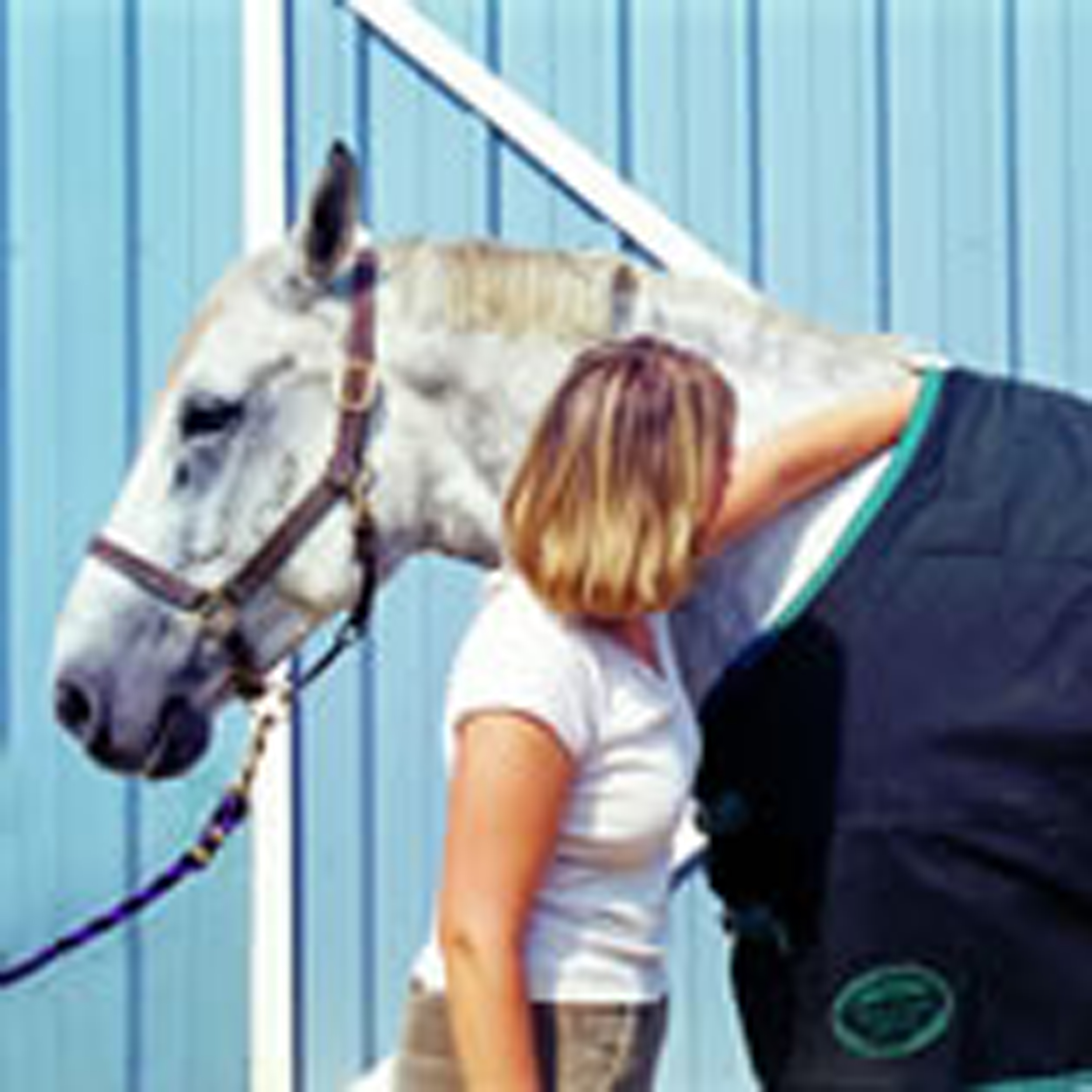 Are Your Horse Blankets Ready for Winter?