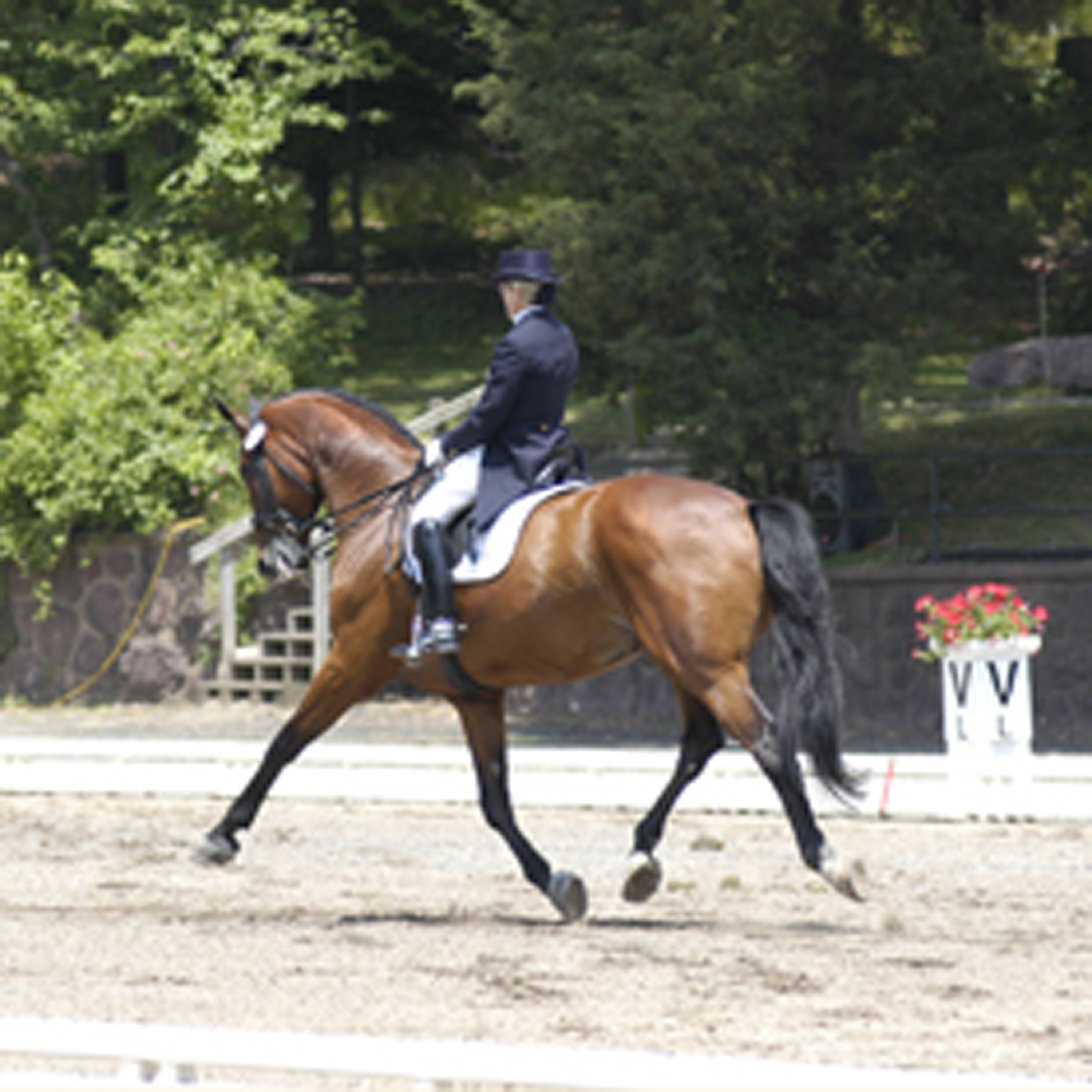 How To Be a Good Grand Prix Dressage Spectator