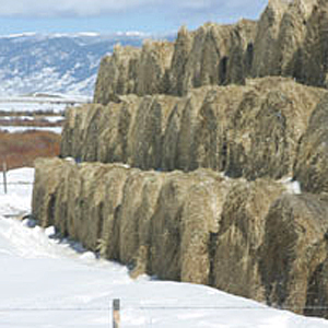 10 Tips for Choosing the Best Horse Hay