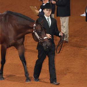 The Psychology Behind Showmanship Classes