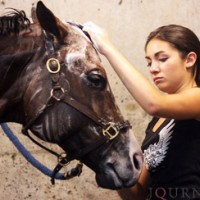 Bathe your horse thoroughly on the day before a horse show or big event. Journal photo.