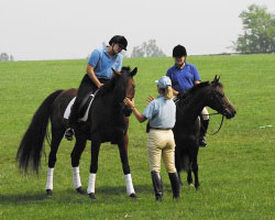 Pony Club Horsemasters' Program for Adult Volunteers