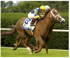 Thoroughbred racing. Photo TOBA