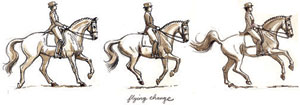 Flying Change of Lead. Drawing by Sandy Rabinowitz. Courtesy Dressage Today